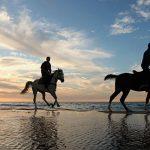 تفریحات کیش : اسب سواری