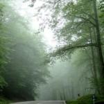 جنگل های ایران