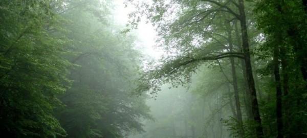 جنگل دوزار تنکابن