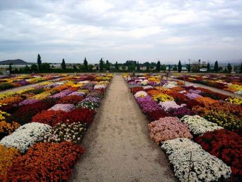 تور محلات از اصفهان
